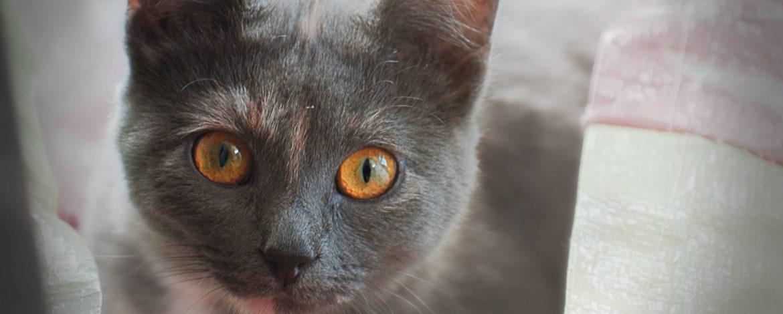 Jak widzi kot? Odpowiedź na nurtujące pytanie!